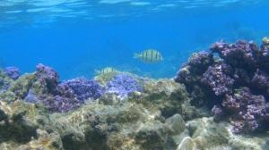 Polynésie 2 193