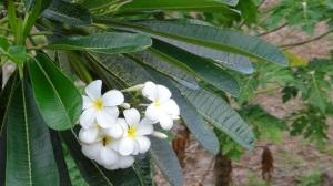 Polynésie 4 097