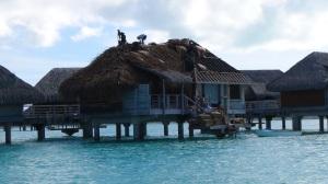 Polynésie 5 281