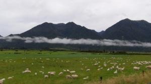 NZ 5 101