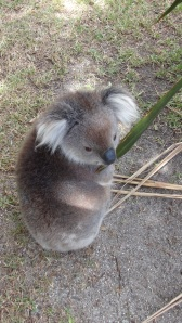 Australie 7 045