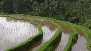 Bali 2 105