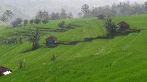 Bali 2 118