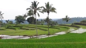 Bali 3 038