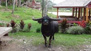 Bali 4 447