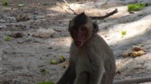 Cambodge 2 056