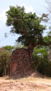 Cambodge 2 214