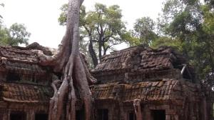 Cambodge 4 113