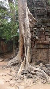 Cambodge 4 134