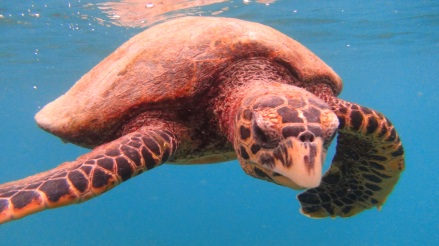 Seychelles 5 046