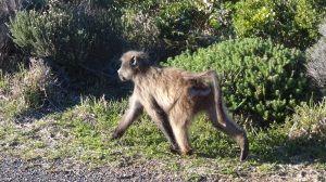 Afrique du Sud 4 159