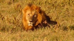 Kenya 1 285