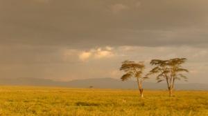 Kenya 1 307