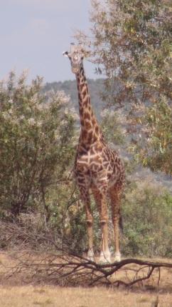 Kenya 2 061