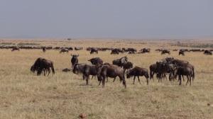 Kenya 2 197
