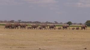 Kenya 7 037